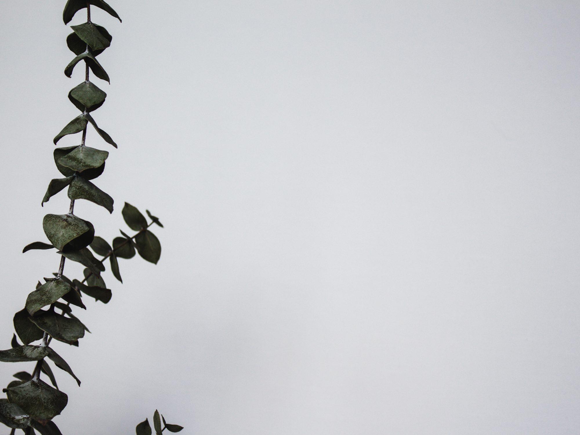 Bild på en växt