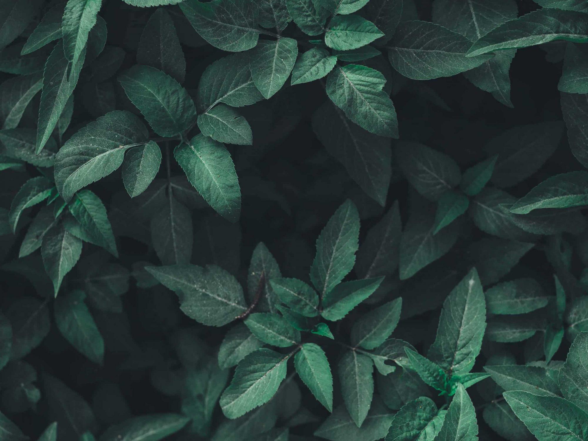 Löv i en skog
